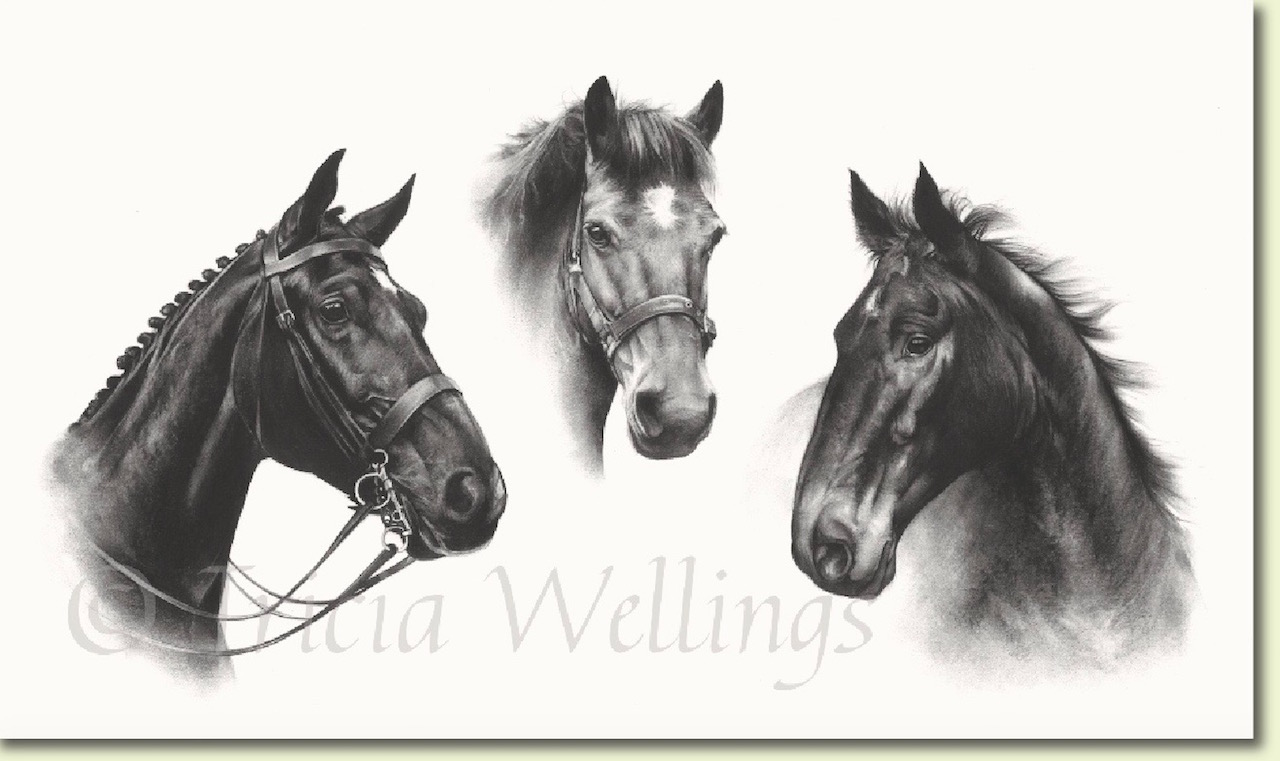 Trio of horse portraits by Tricia Wellings Fine Art