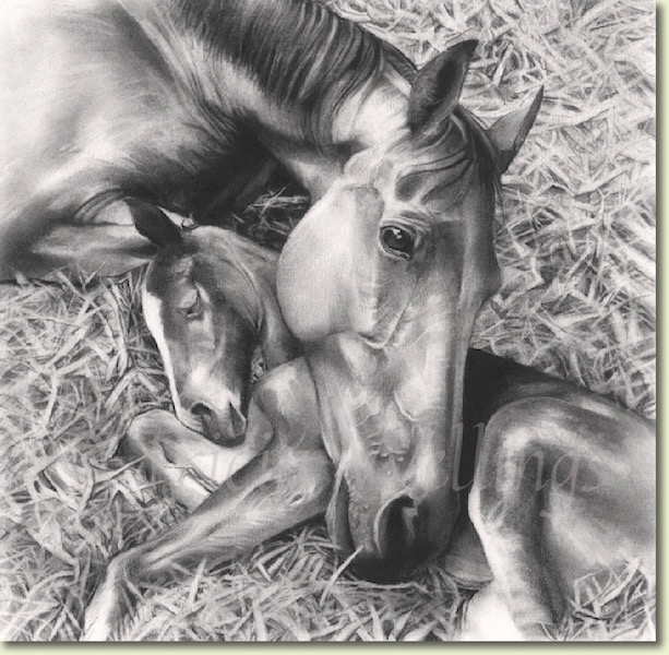 Charcoal drawing of mare and foal by Tricia Wellings Fine Artist, now for sale