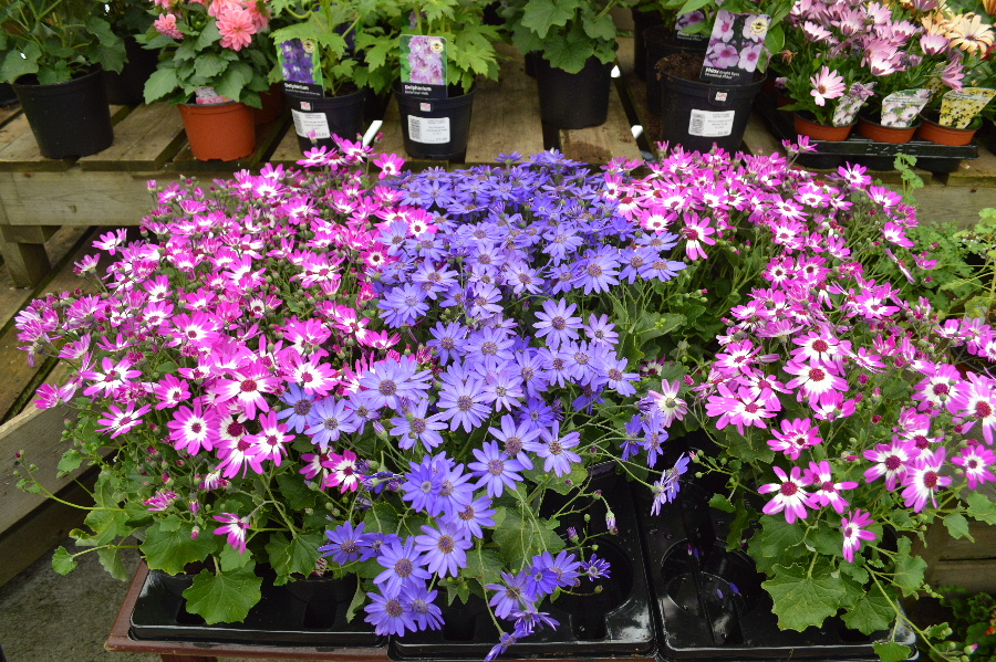 We stock a wide range of plants at the Castle Douglas Garden Centre