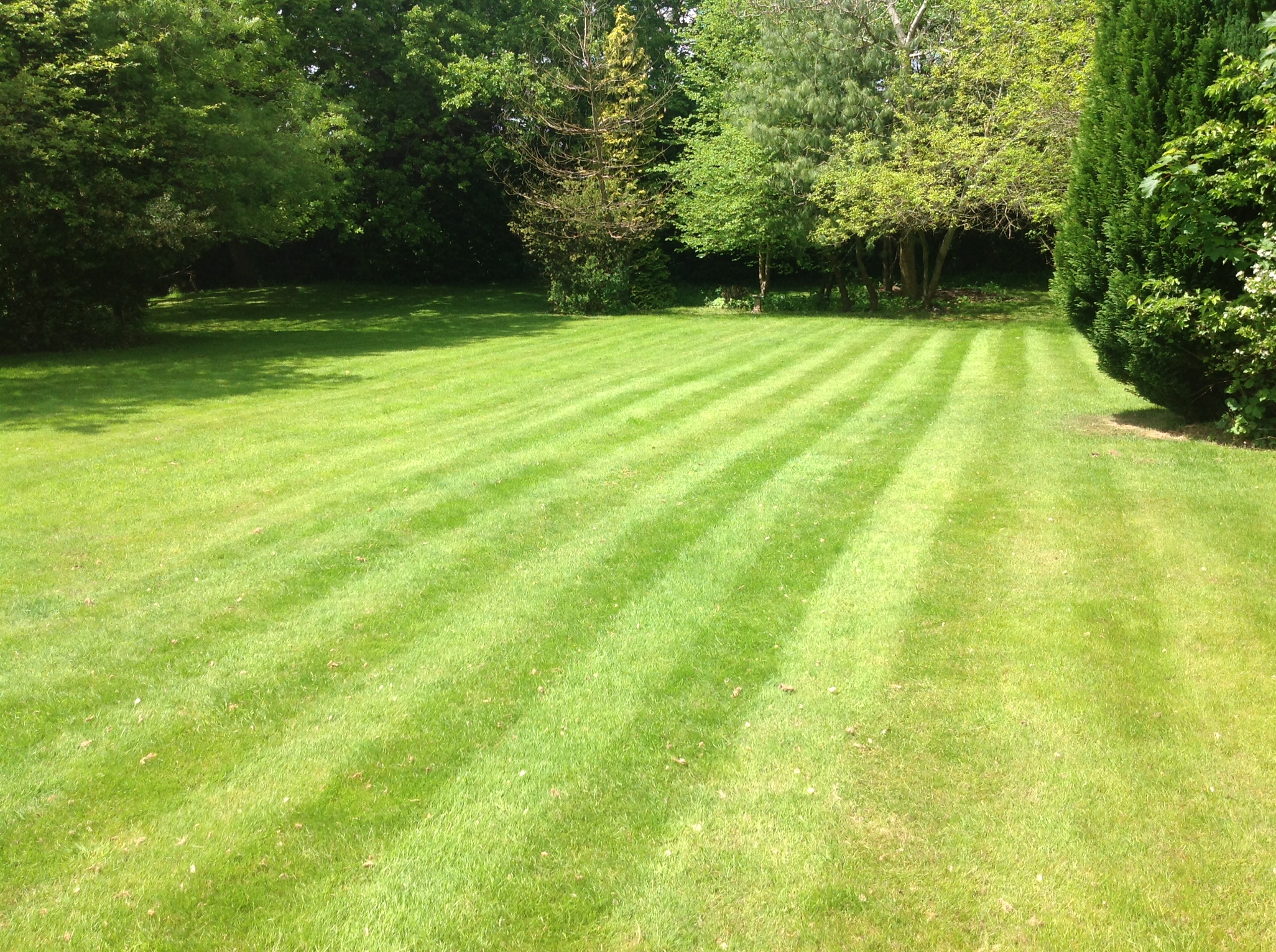 Surrey lawn care services for Lawn care professionals