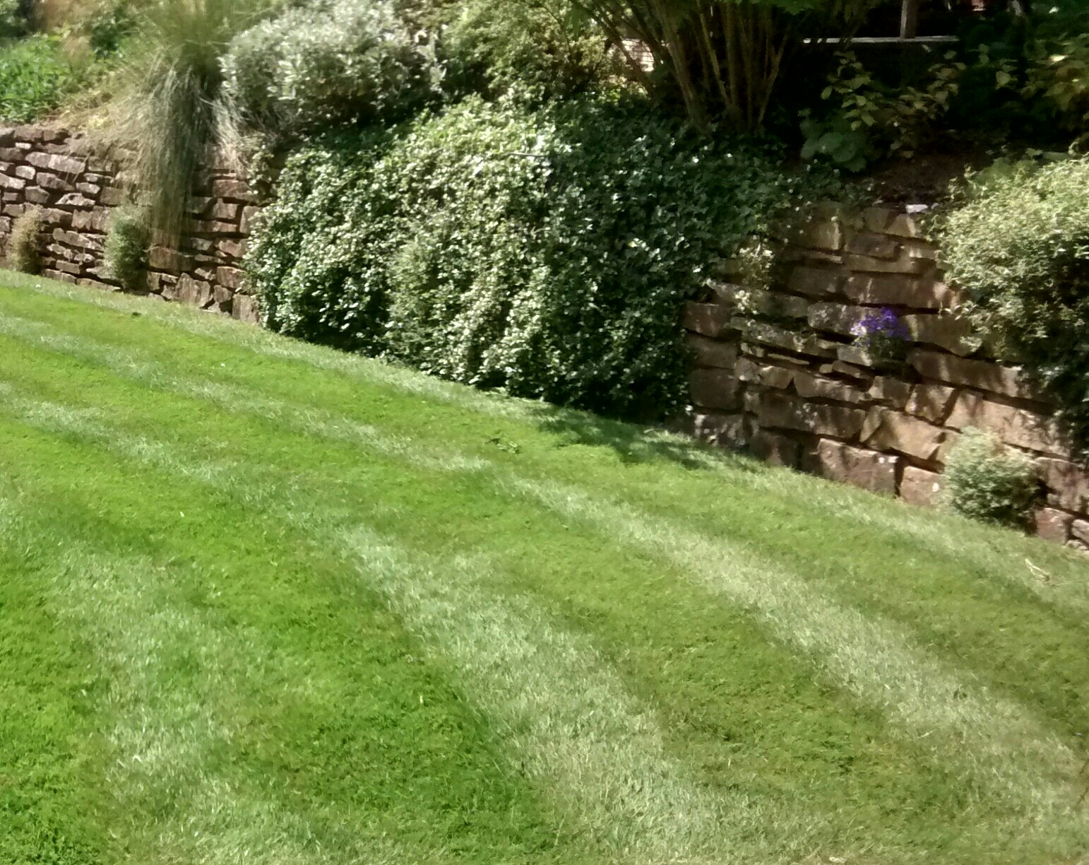 Lawn Care Service, Lawn Treatment Companies, Lawn Maintenance Business