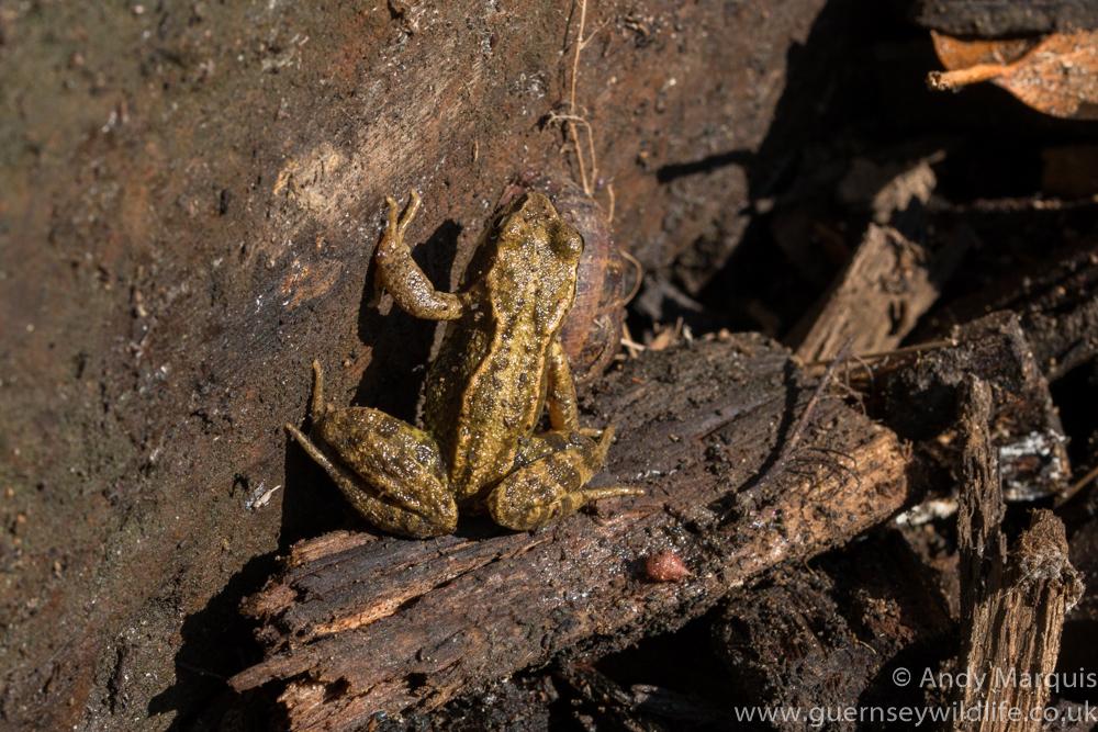 Frog 0317