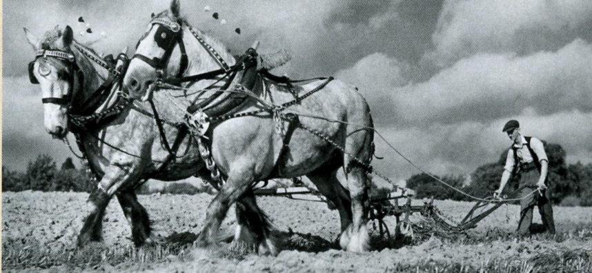 N69 Horse Drawn Plough