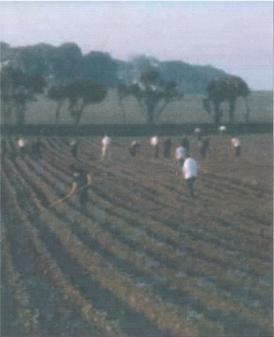 Workers hoeing the fields in Kirkbean