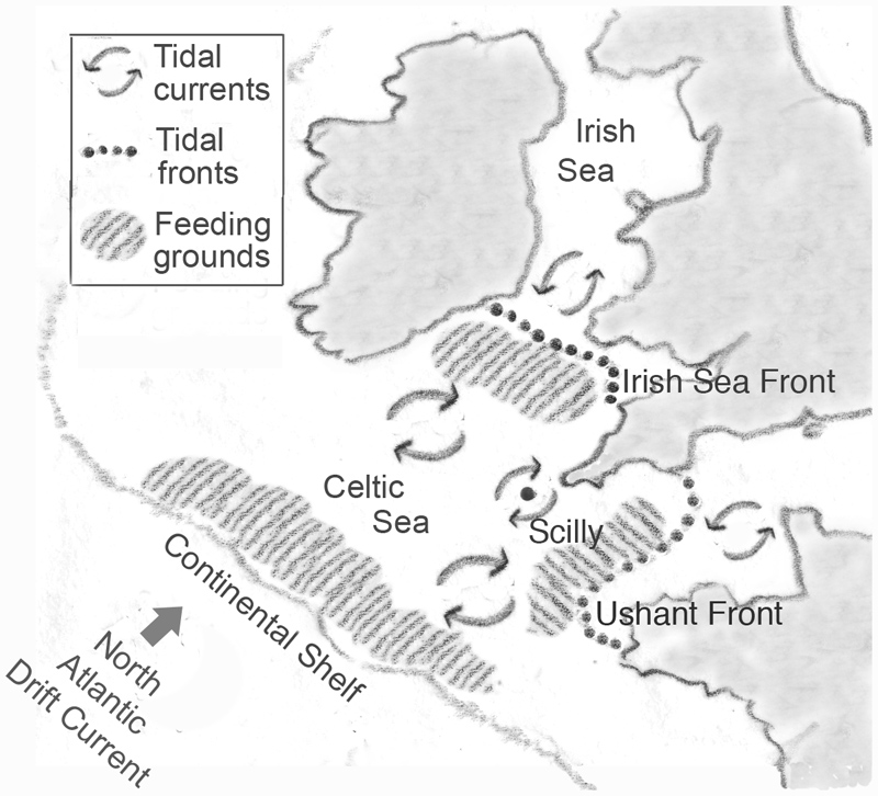 Map of NE atlantic showing tidal currents, tidal fronts and feeding grounds
