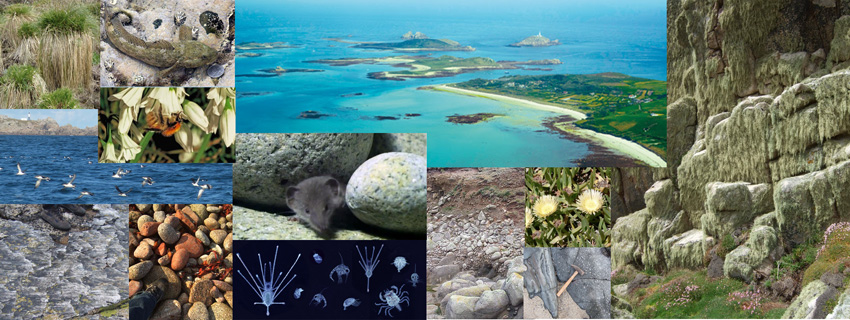 Collage of wildlife, rock formations and aerial view of islands