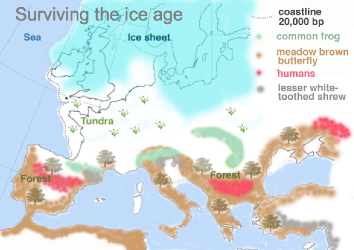 Map showing European Ice Age refugia of lesser white-toothed shrew, meadow brown butterfly, common frog and humans