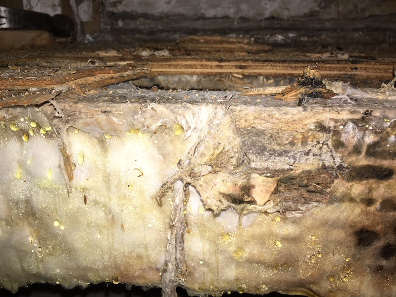 Dry rot in floorboards, but this can be treated by Ryedale Remedials Dumfries