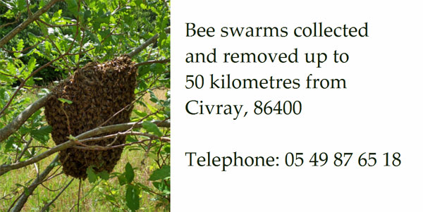 Bee-swarm-collection-Vienne,Charente,Deux-Sevres,Charente-Maritime-France