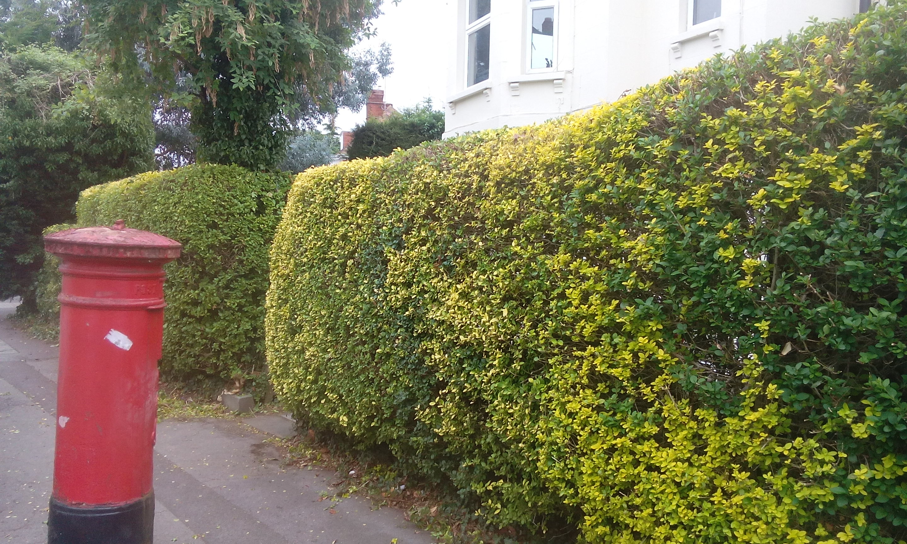 hedge cutting in pembrokeshire