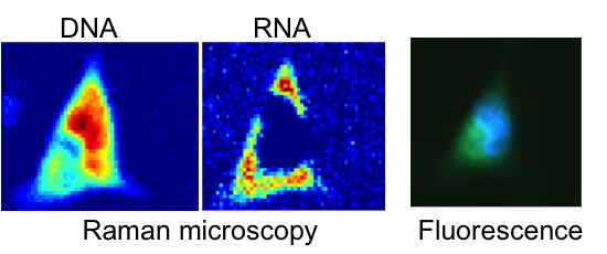 Raman cell imaging microscopy