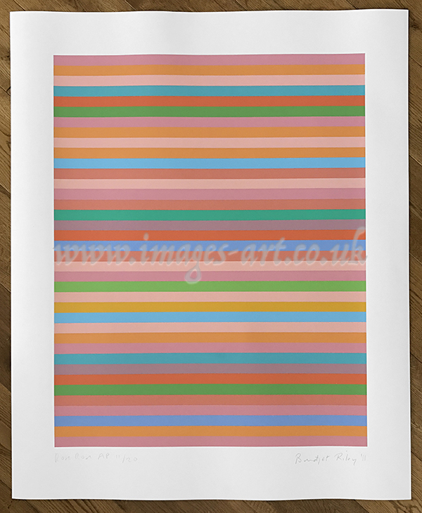 Bridget Riley Rose Rose
