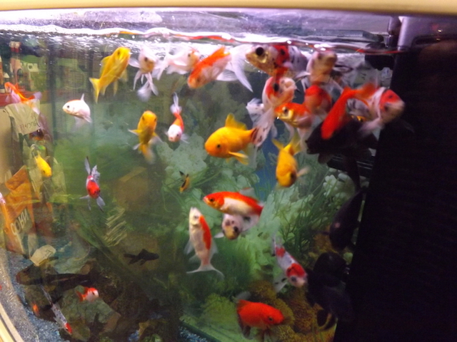 Large aquarium full of colourful fish