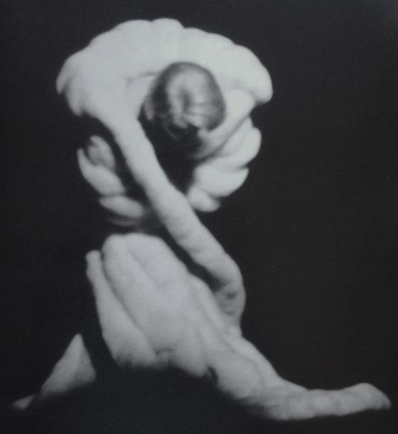 Marlene Dietrich by Peter Riva