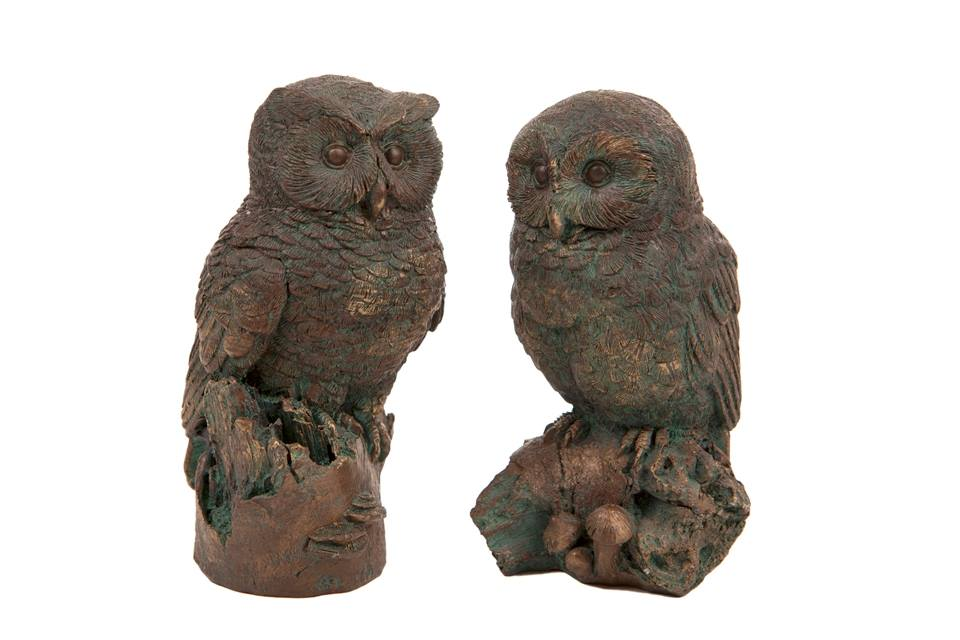 Two small owls