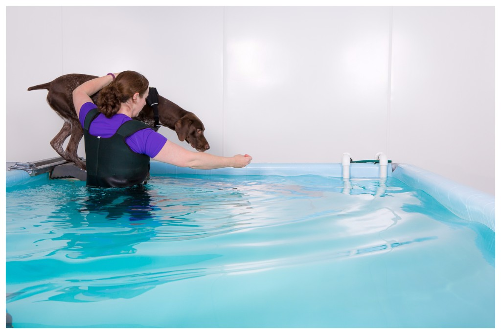 hydrotherapy pool, gloucester, gloucestershire, canine hydrotherapy, physiotherapy
