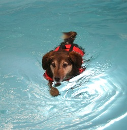 canine hydrotherapy physiotherapy gloucester gloucestershire