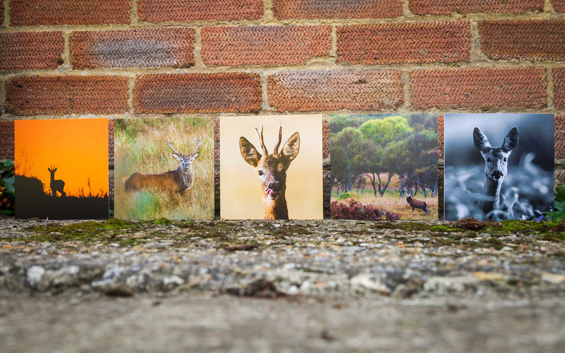 British deer mixed greeting cards m4hsunfo