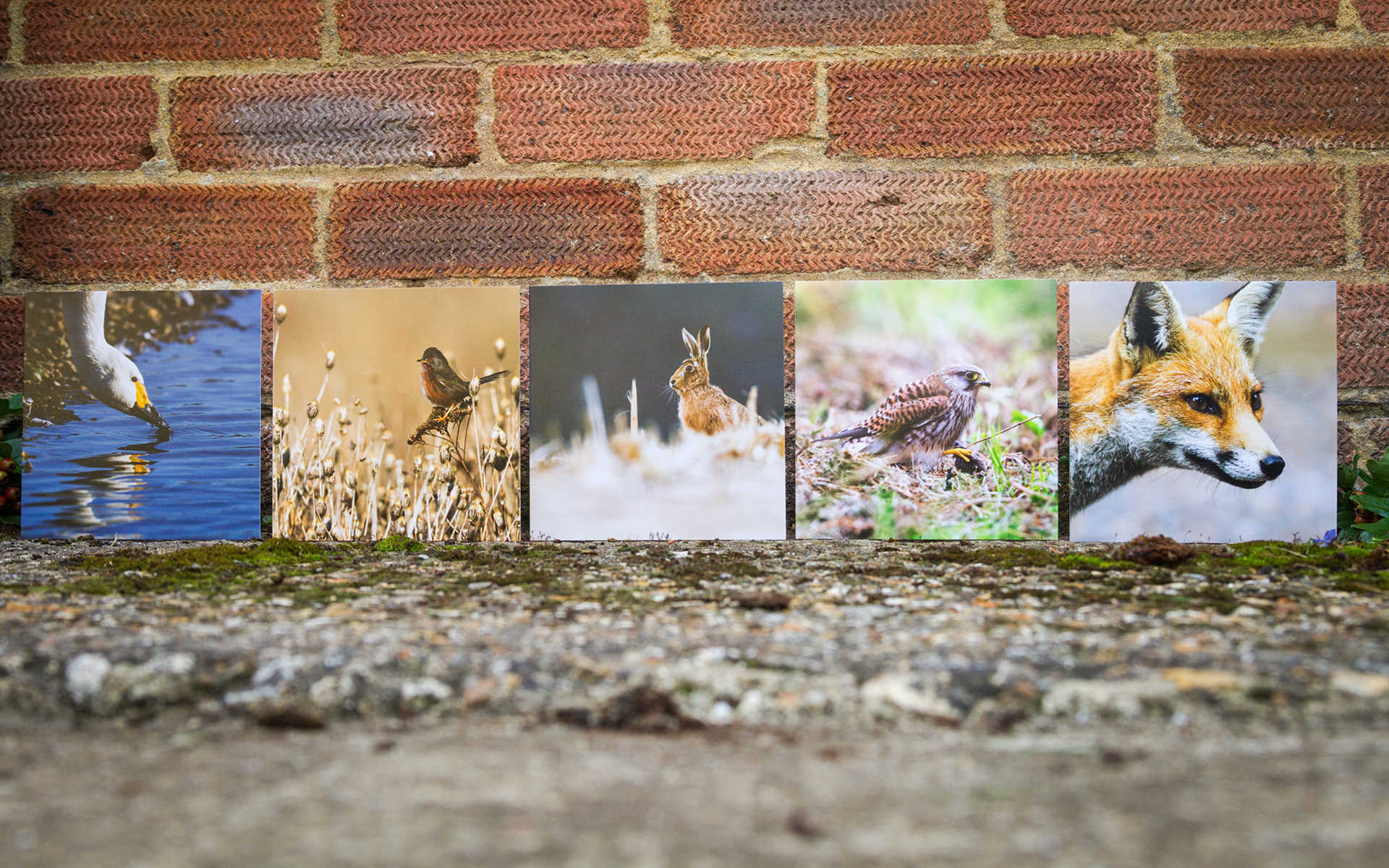British wildlife mixed greeting cards m4hsunfo