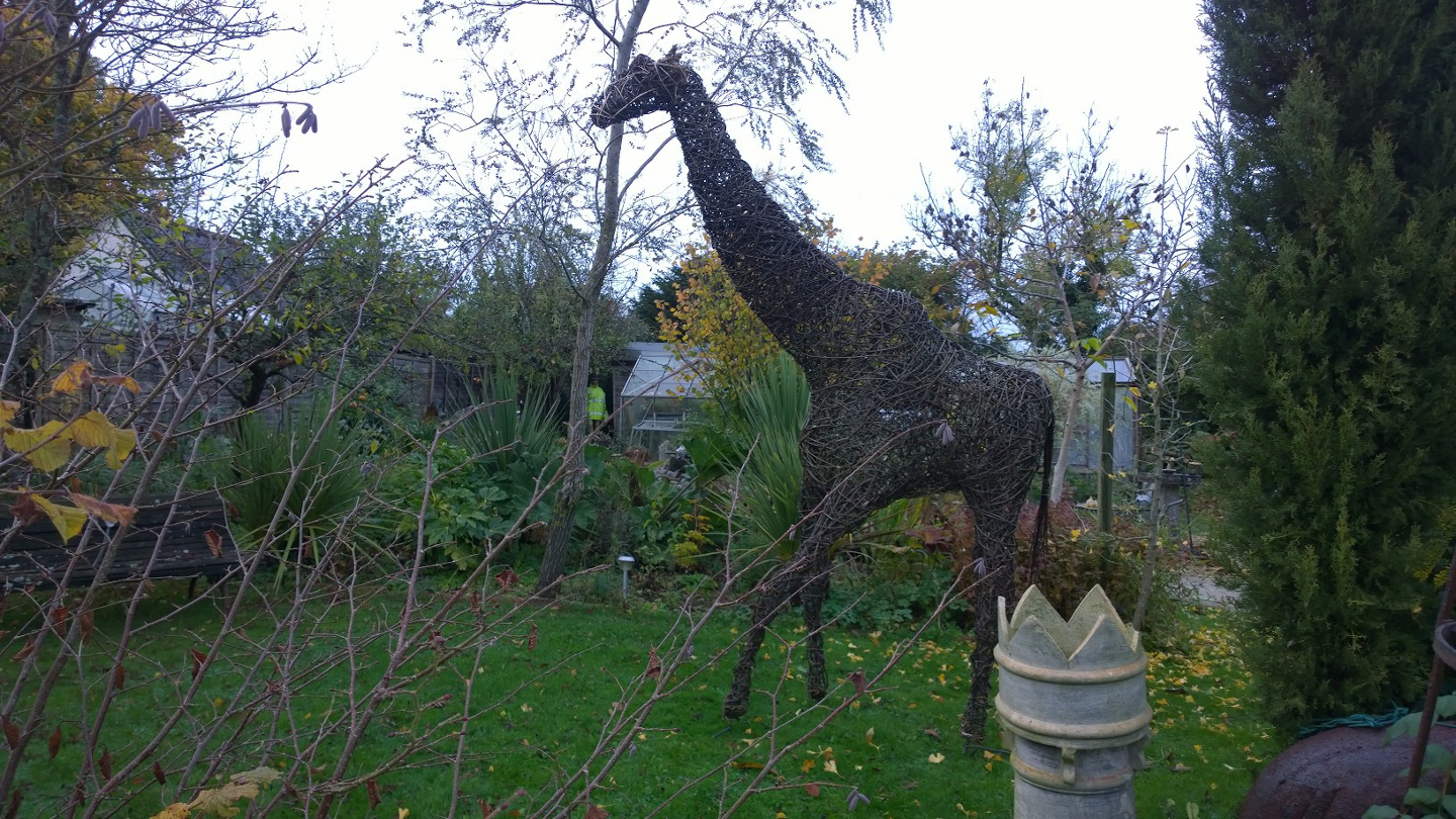 Willow Giraffe at home in Dorset