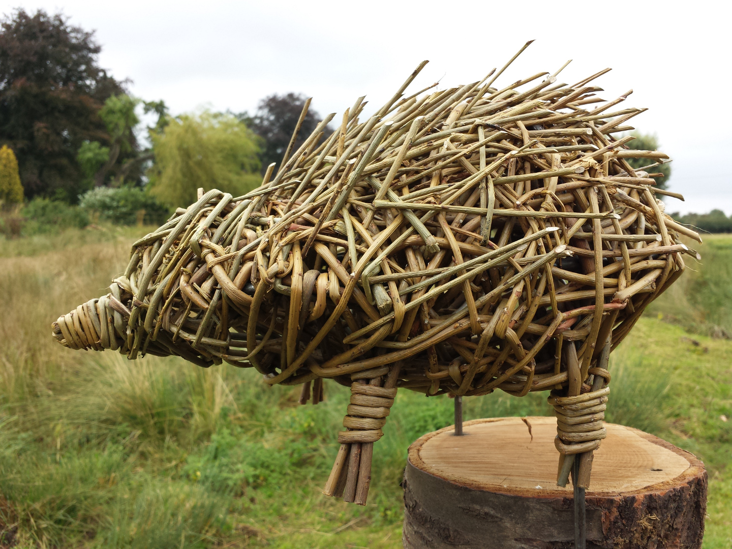 Willow Hedgehog