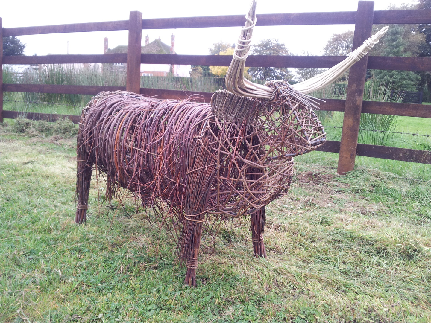 Willow Highland Cow