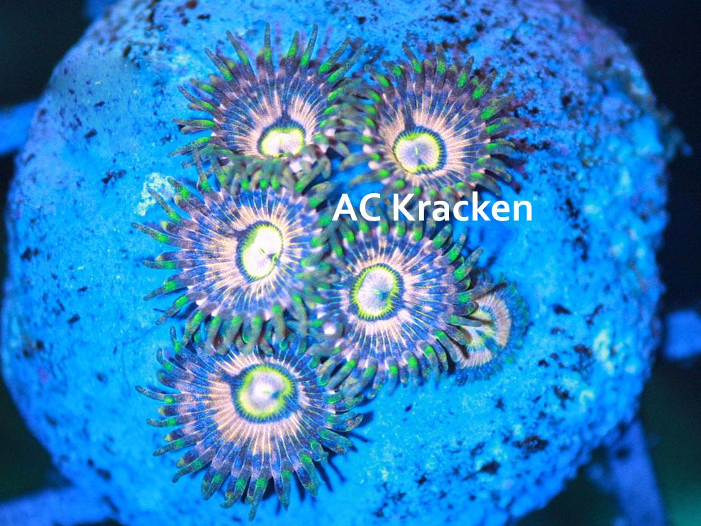 AC Kraken