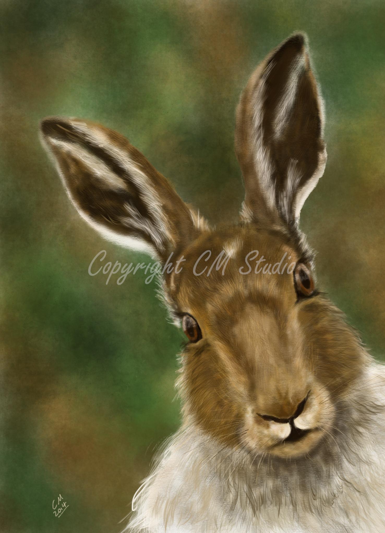A4 Print Hare Portrait