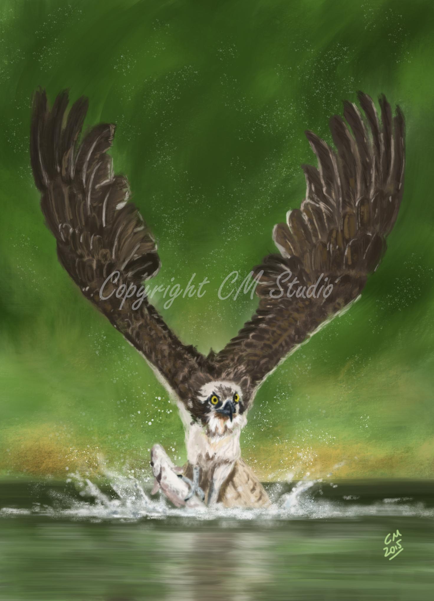 A4 Print Osprey