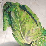 Study of a cabbage
