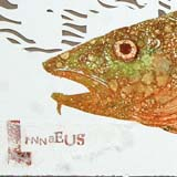 Print of a cod with it's Latin name