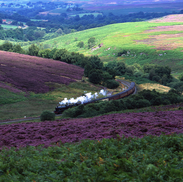 North Yorkshire Moors, Heather. Holiday location