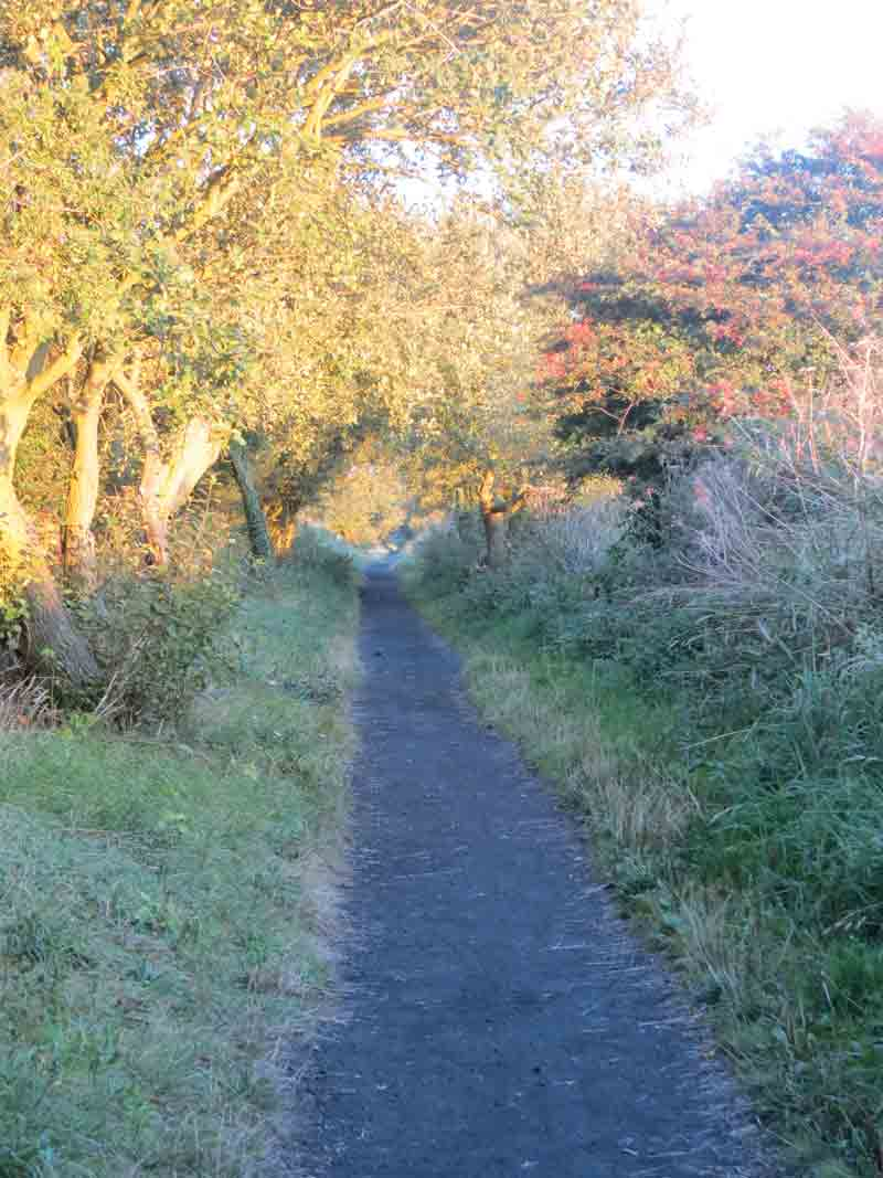 Evening Sun on the disused railway line