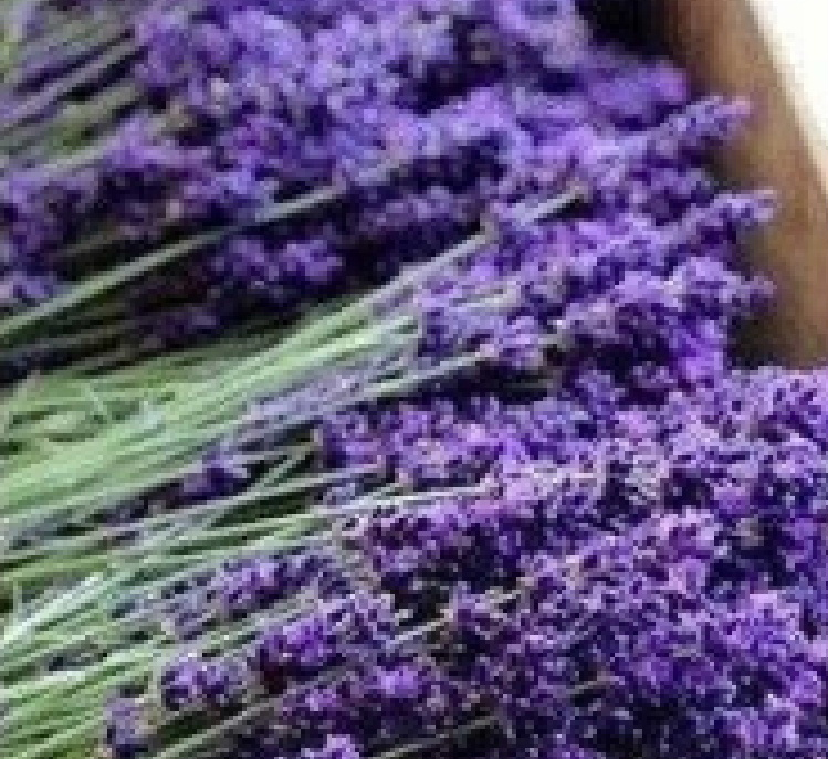 Lavender is a powerful ingredient in aromatherapy