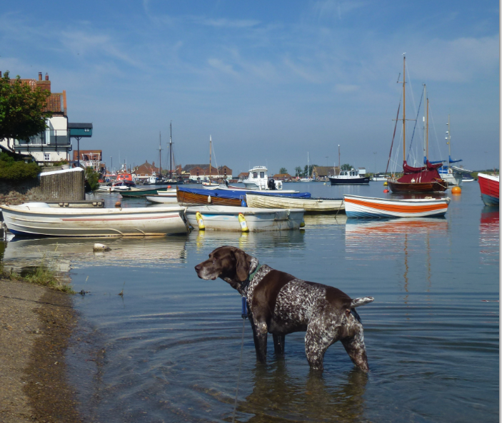 Wells-next-the-Sea and Pet Friendly
