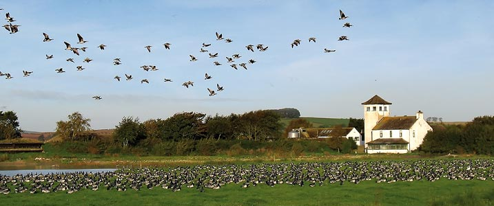 WWT Caerlaverock - location of BBC Autumn Watch