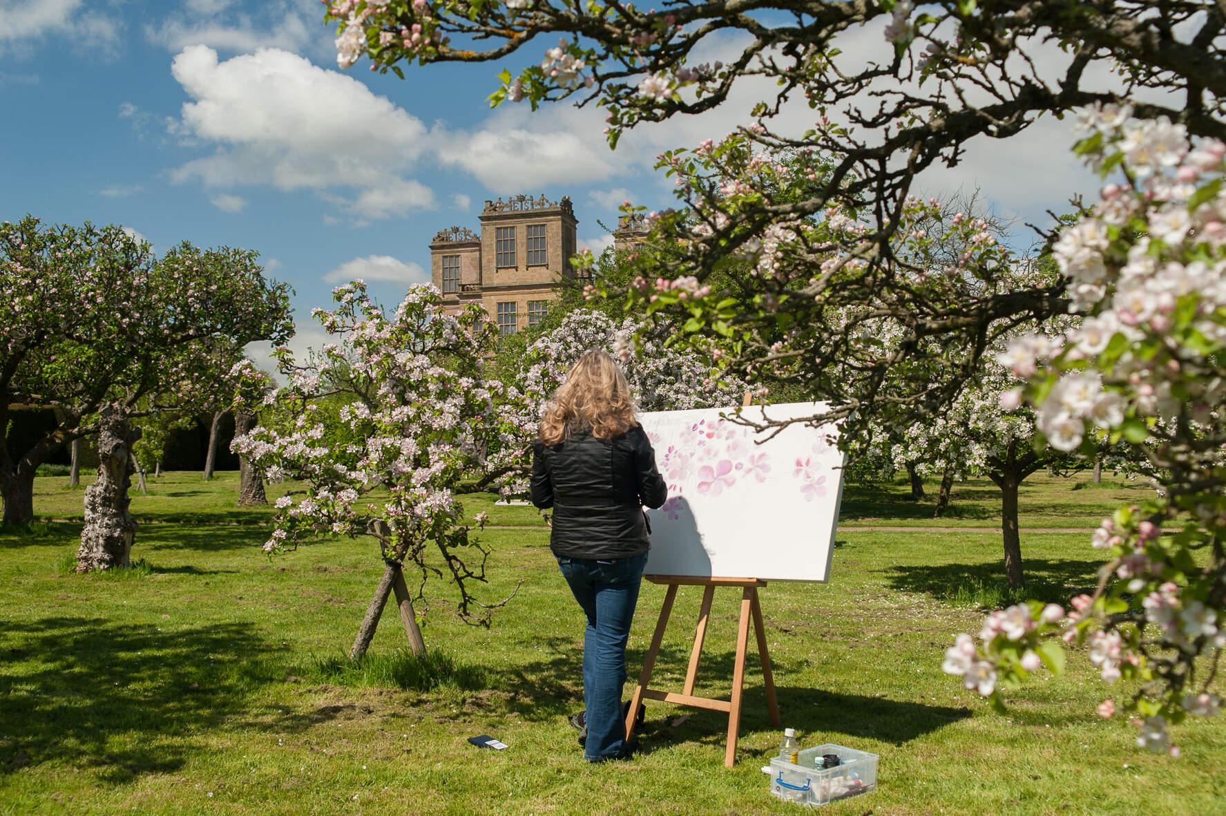 Apple Blossom Orchard, Hardwick Hall
