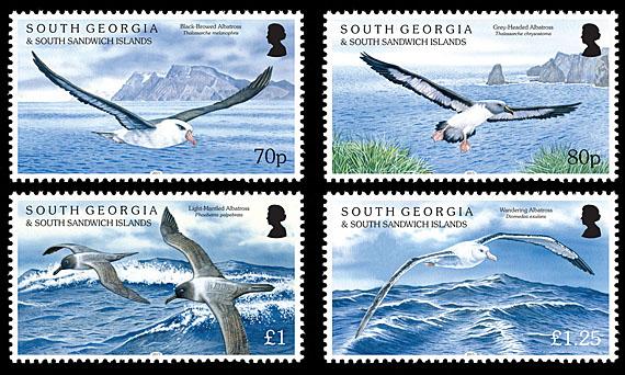 South Georgia Albatrosses Setjpg