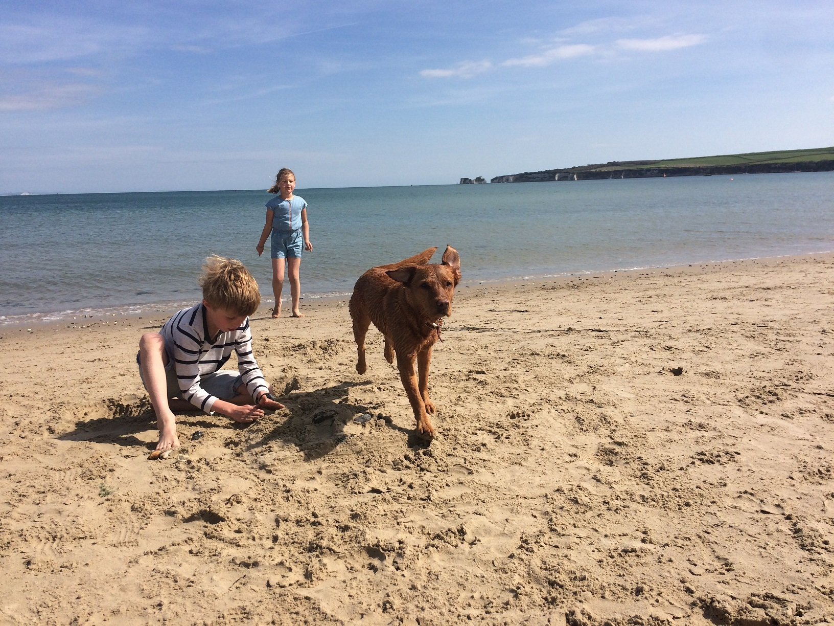 How To Find The Most Dog Friendly Beaches In Dorset