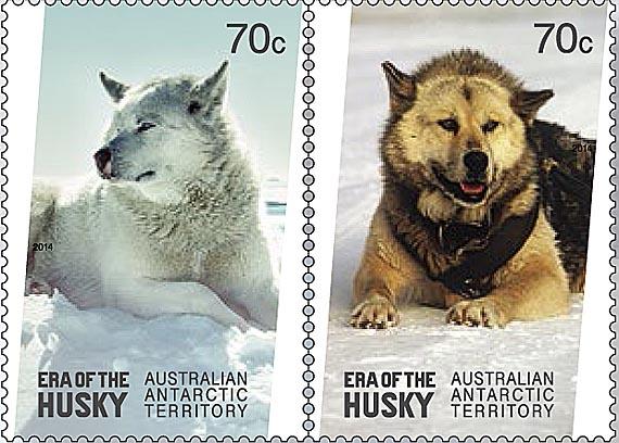 Huskies AAT 02jpg
