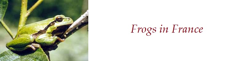 About the frogs in France