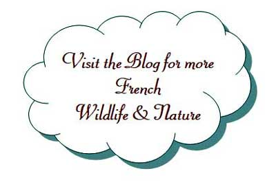 French wildlife blog
