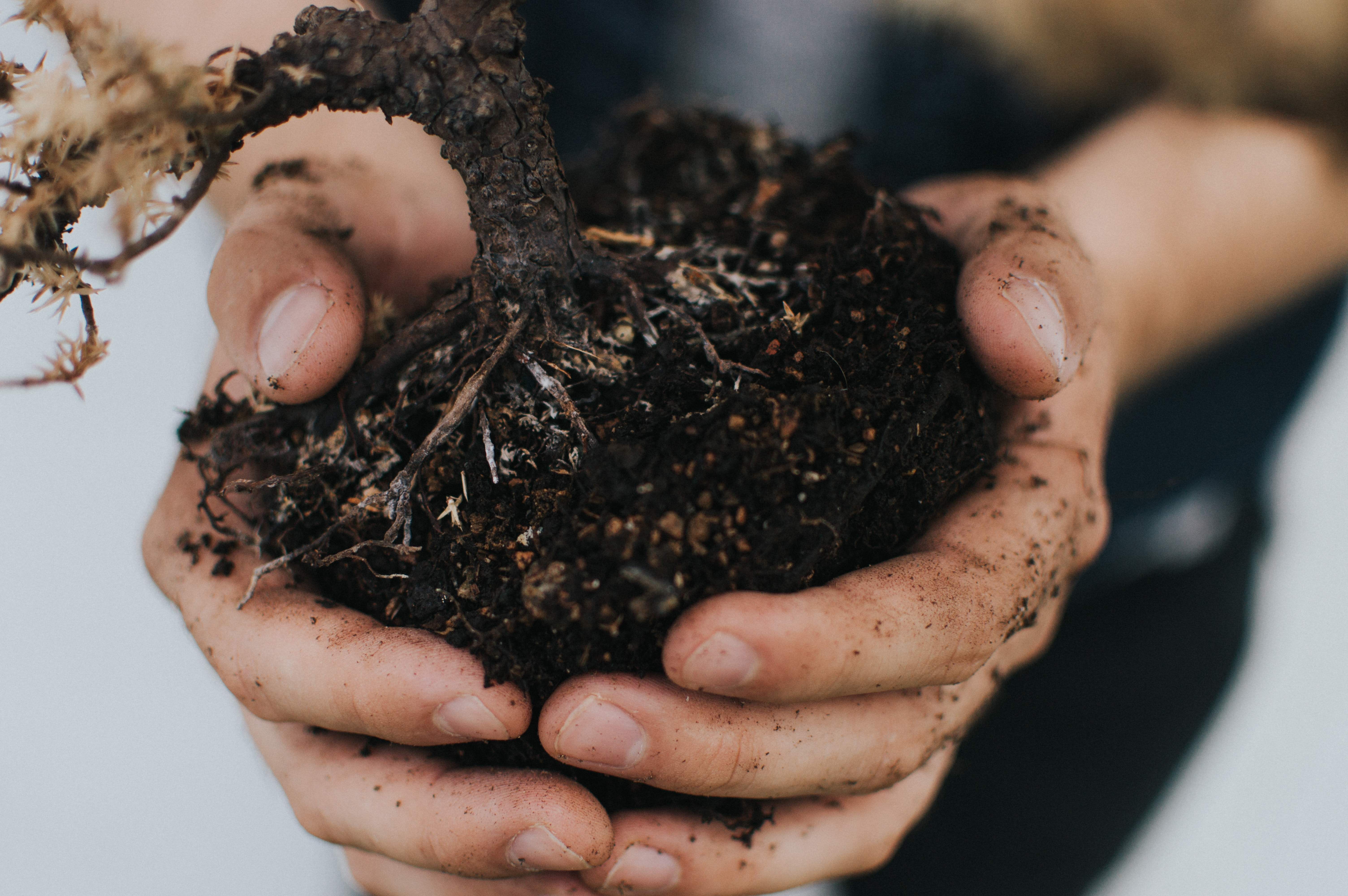 Link to compost and bark page