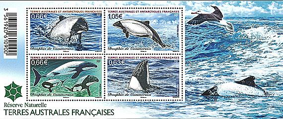 TAAF Dolphins 2014 06 14jpg