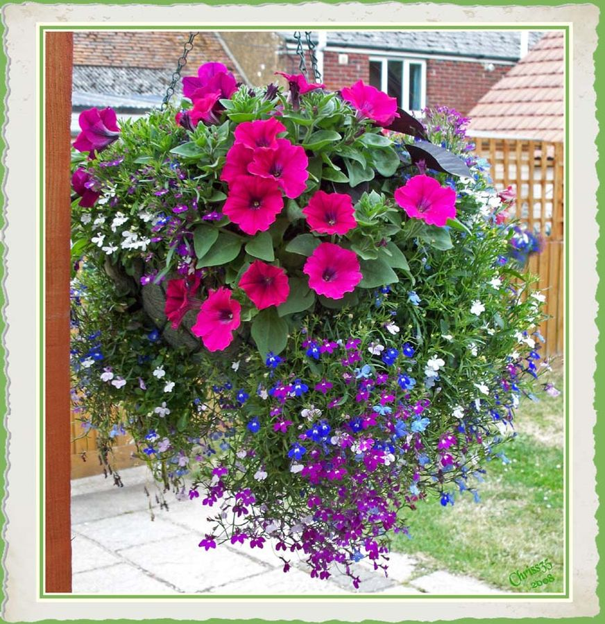 18 Mixed Summer Hanging Basket Plants