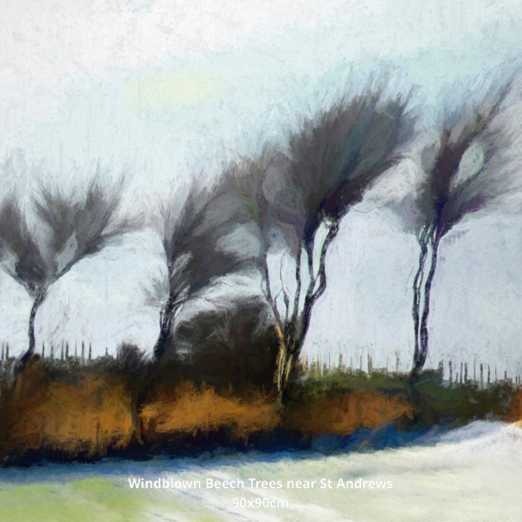 Windblown Beech Trees near St Andrews