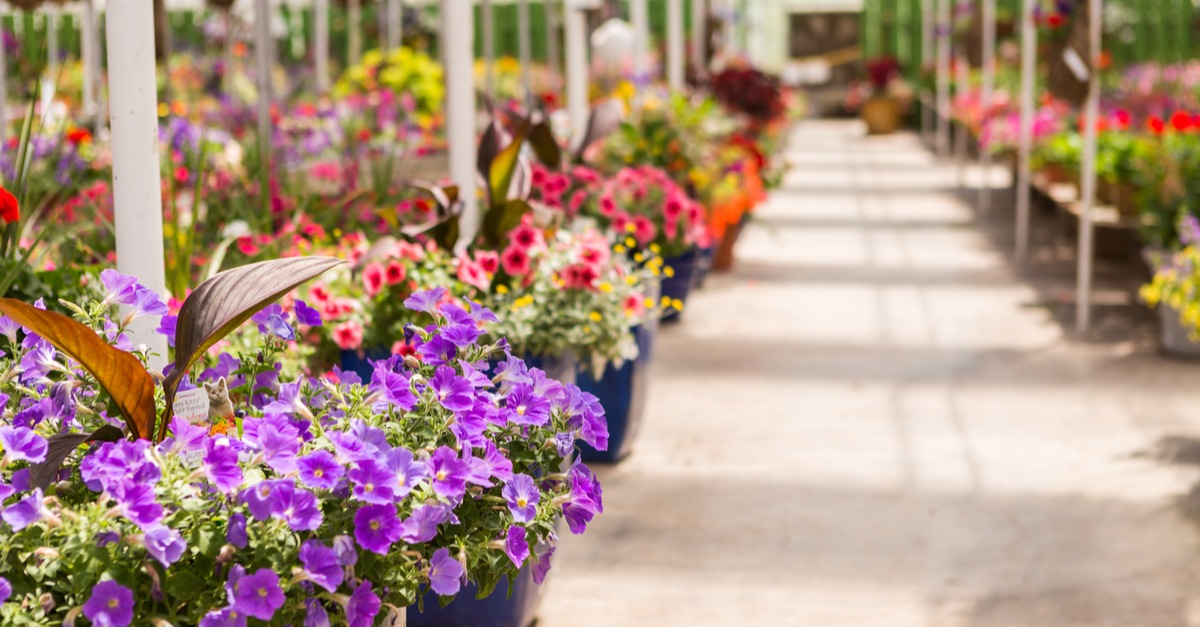Market segmentation. What garden centres can teach us