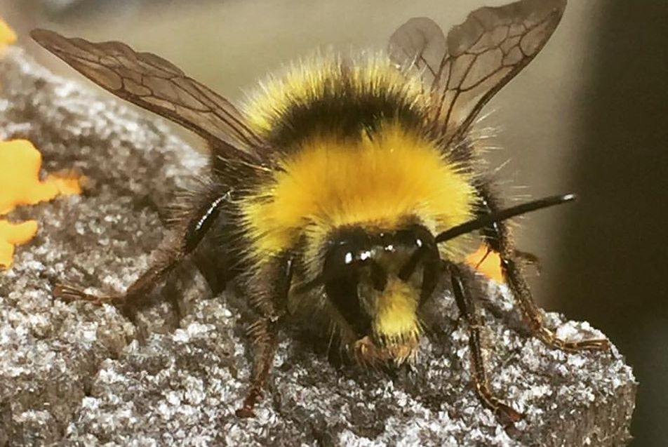 Close up of a bumble Bee for a photography workshop run by Akers of Art