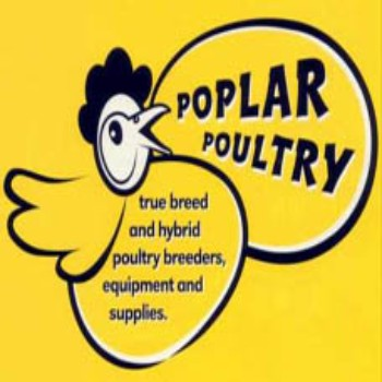 Poplar Poultry at Little Morton Farm