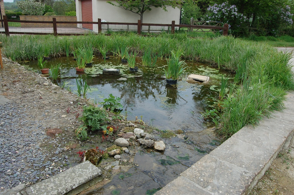 the rill running outside the front of the cottages culminates in the bog garden outside The Cobb